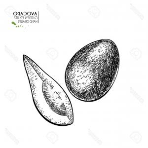 Vector Health Inc: Photostock Vector Hand Drawn Whole And Half Avocado Vector Engraved Illustration Natural Orgainc Vegetable Food Health
