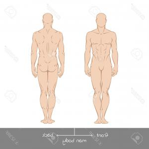Male Body Shapes Human Outline Vector | CreateMePink