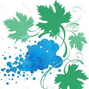 Vector Vine Tree: Photostock Vector Stylized Vine Branch With Leaves Vector Illustration