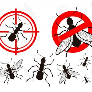 Termites With Wings Vector: Photostock Vector Black Silhouettes Of Ants And Termites