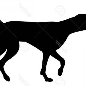 Pointer Dog Vector: Vector Illustrated Portrait Of German Shorthaired Pointer Dog Gm