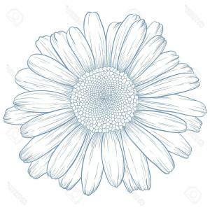 Blue Daisy Flower Vector: Photovector Blue Daisy In Vintage Engraving Style