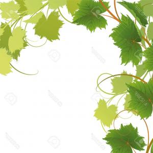 Vector Vine Tree: Floral Grapevine Cross Grape Clusters On