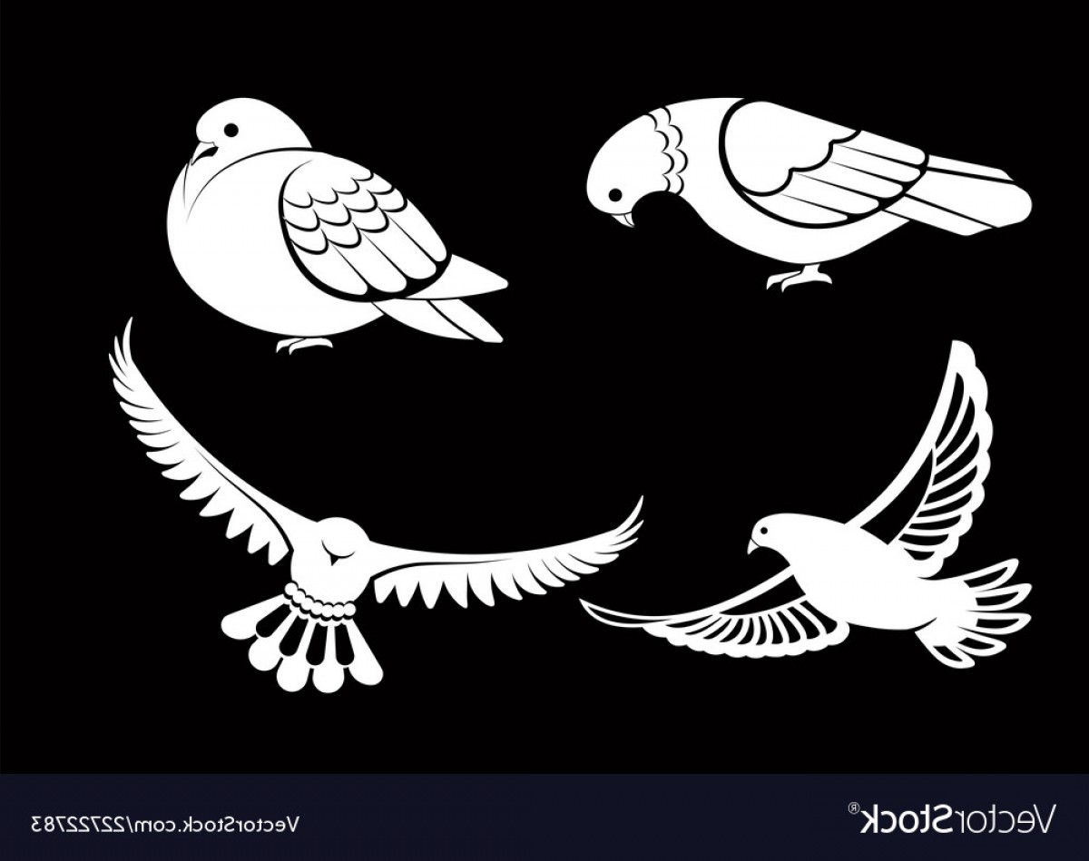 White Bird Vector: Pigeon Or Dove White Bird Flying With Spread Vector