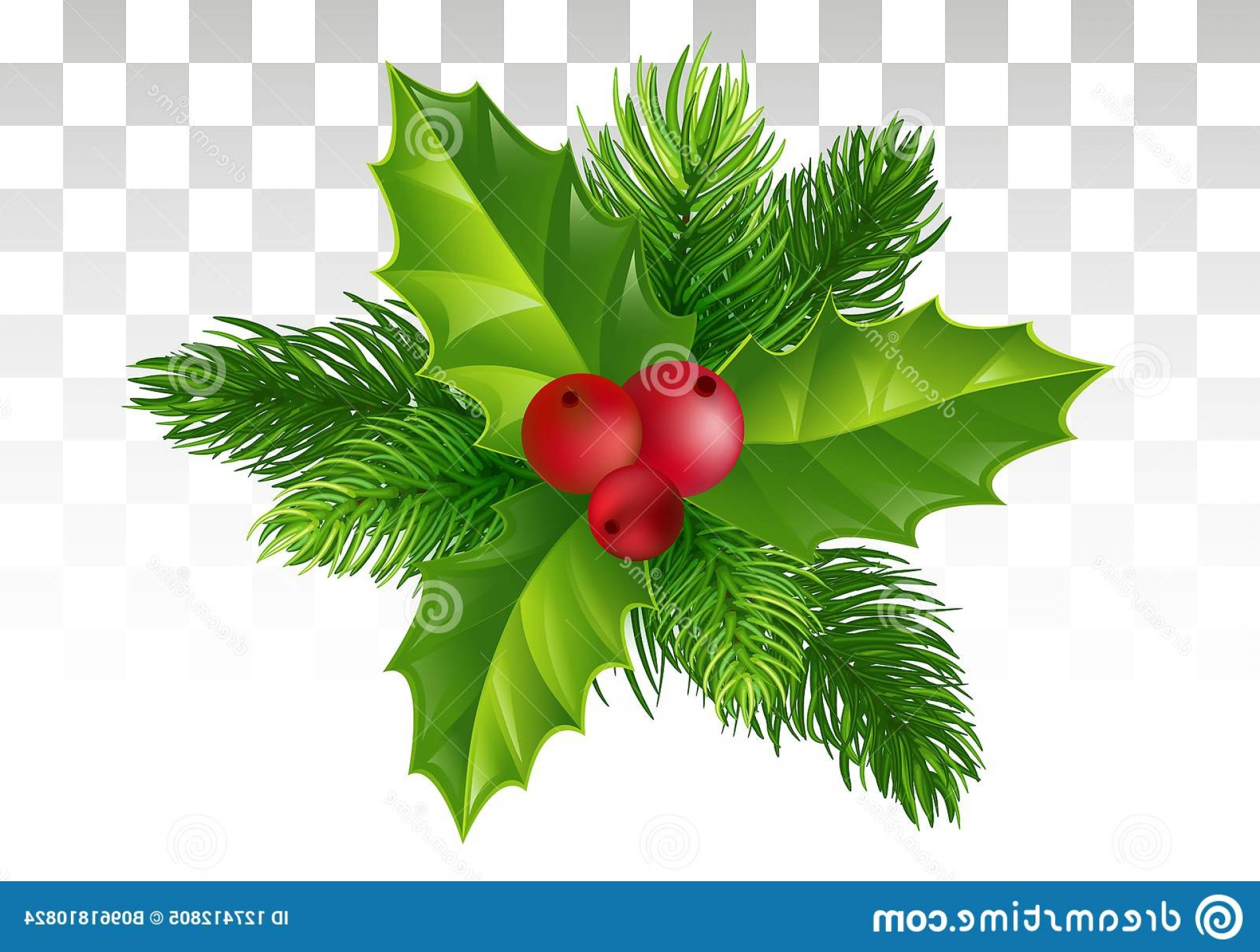 Pine Leaves Vector: Pine Tree Branch Holly Leaves Red Berry Christmas Decorat Winter Decor Branches Padabe Berries Nice Festive Composition Image