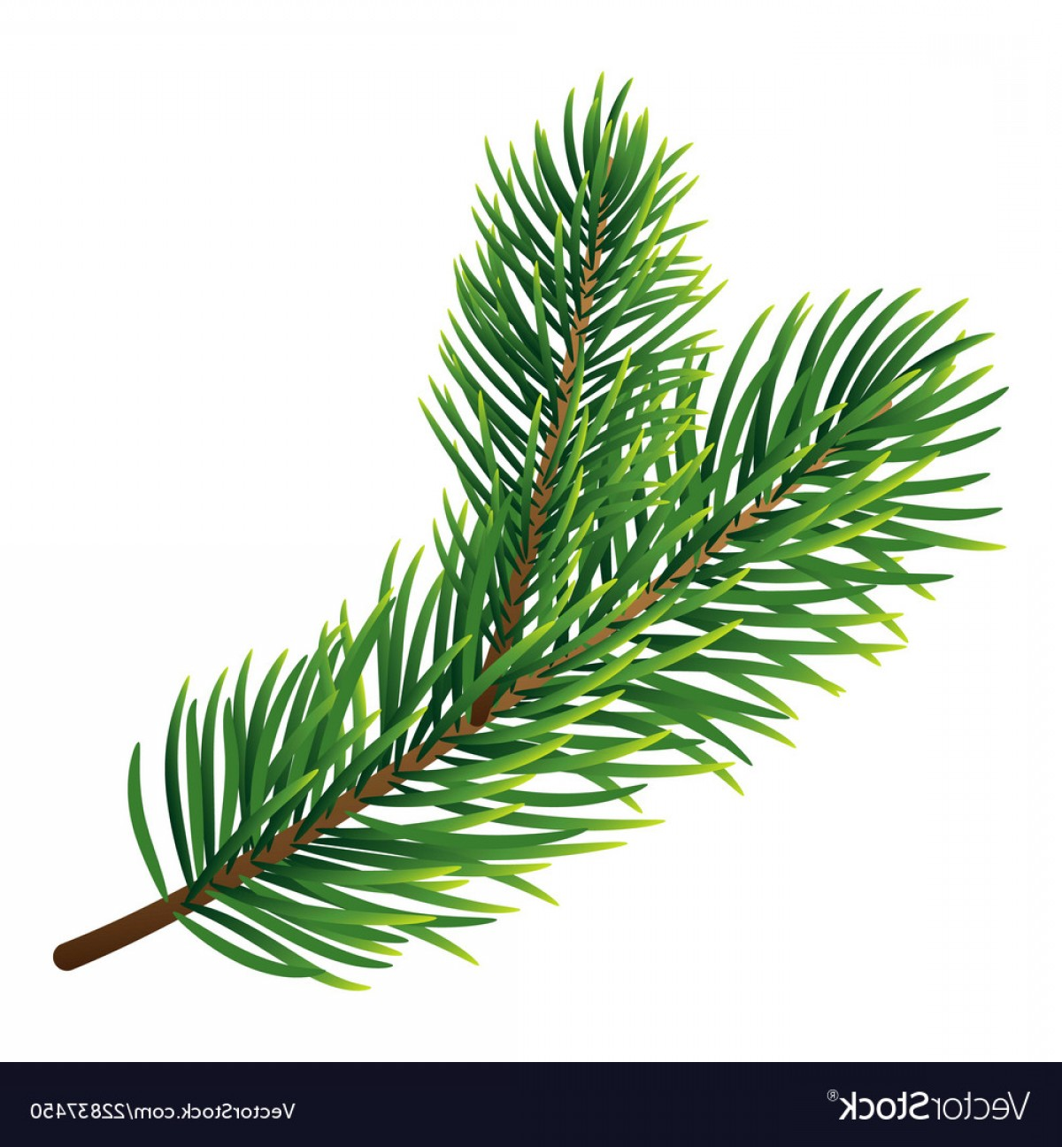 Pine Leaves Vector: Pine Tree Branch Icon Realistic Style Vector