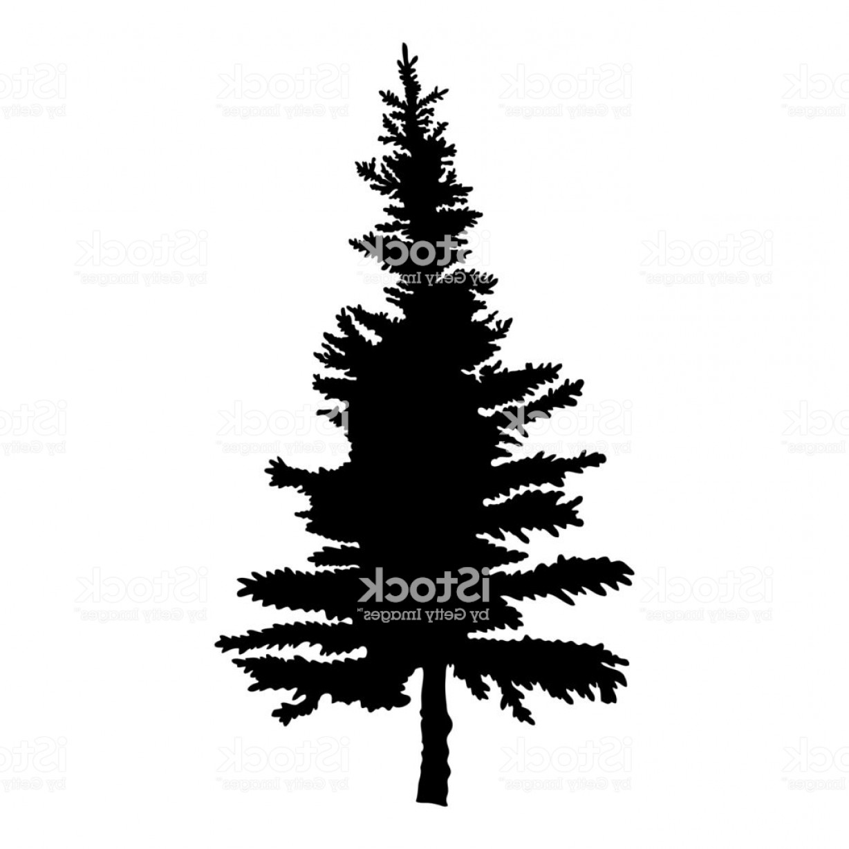 Pine Tree Vector Format: Pine Tree Isolated On White Background Silhouette Woods And Fir Tree For Your Design Gm