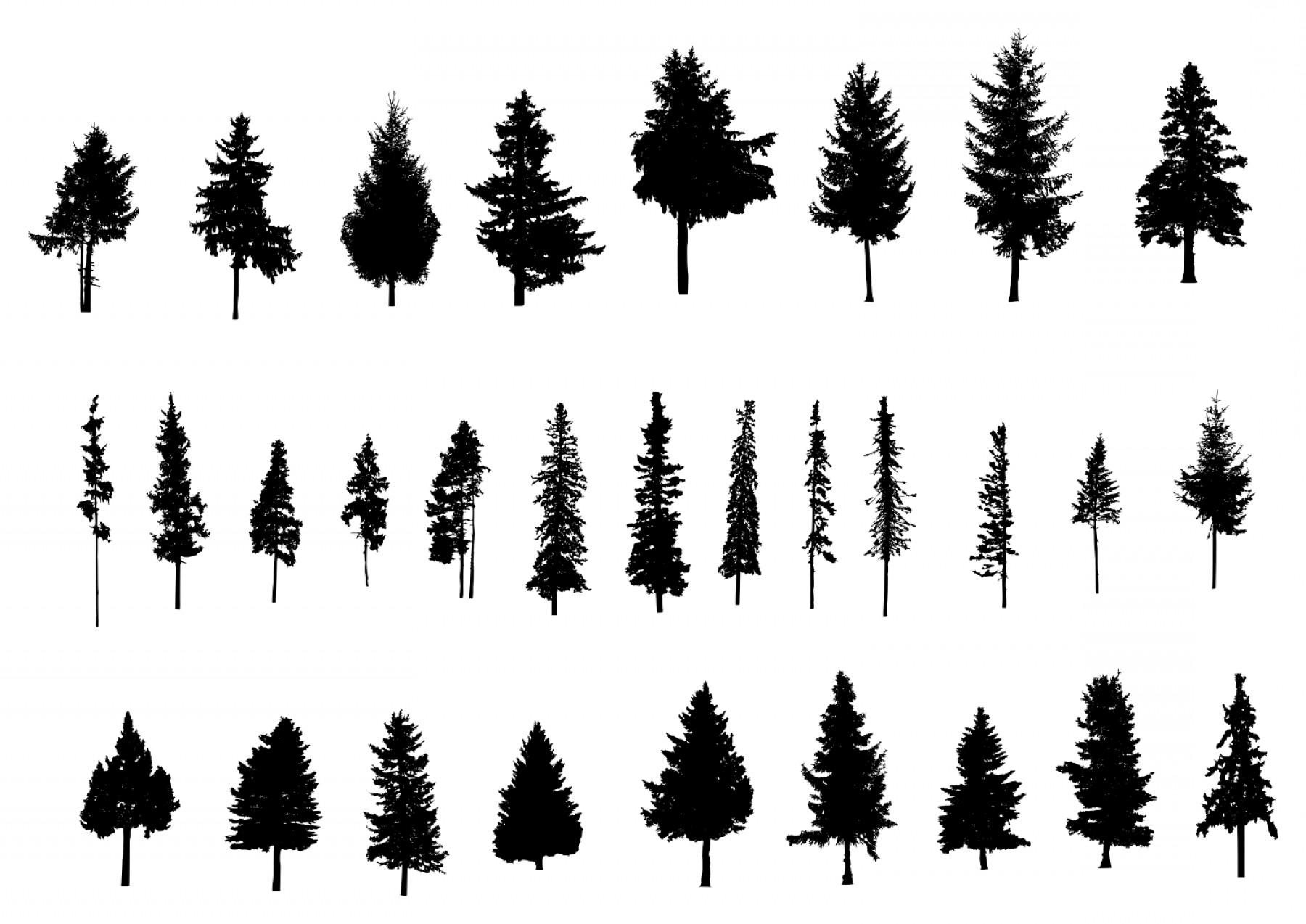 Pine Tree Vector Format: Pine Tree Silhouette Png Transparent Vol