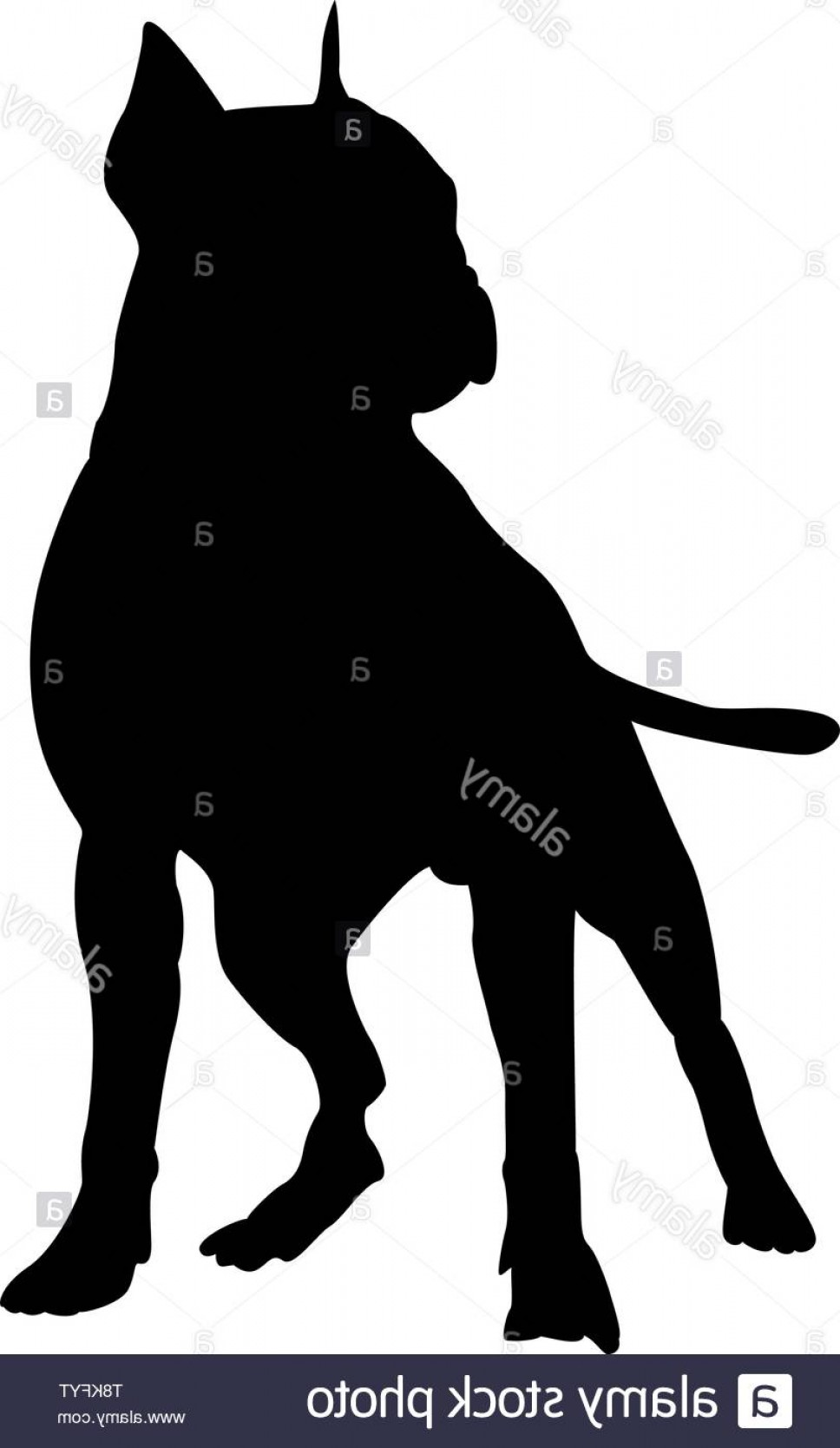 Pit Silhouette Vector: Pit Bull Terrier Dog Silhouette Smooth Vector Illustration Image
