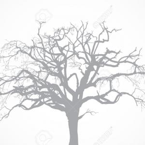 Vector Black Tree No Leaves Oak: Pin Oak Leaf Skeleton Vector Bdgrdcxubjgmygxa