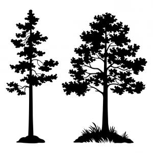 Pine Silhouette Vector: Pines Silhouette Vector Tree Isolated Pine