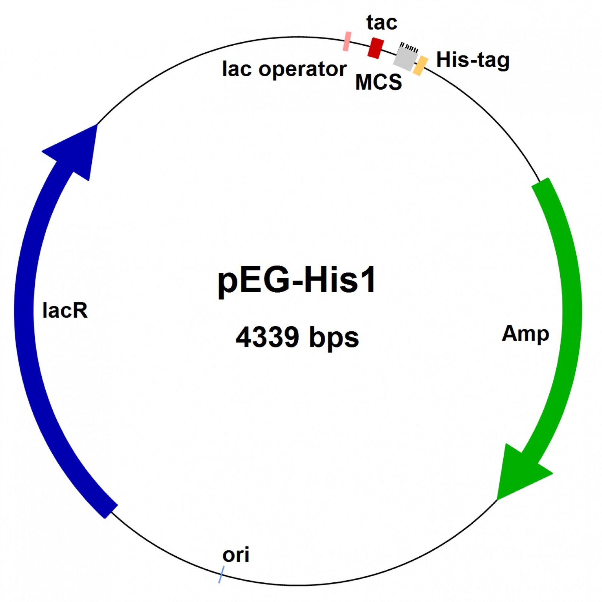 PUC Vector Expression: Plasmid Lux And Puc In Gene Expression