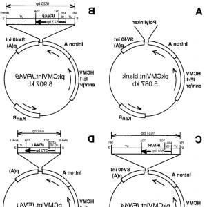 Mammalian Expression Vector: Recombinant Protein Expression For Structural Biology Hek F