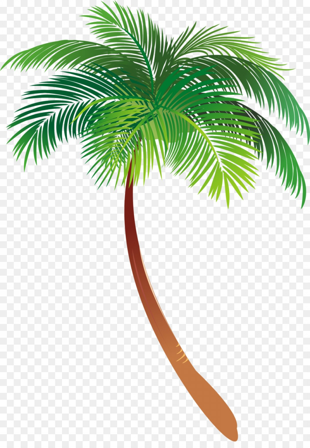 Watercolor Palm Tree Vector: Png Asian Palmyra Palm Illustration Palm Trees Vector