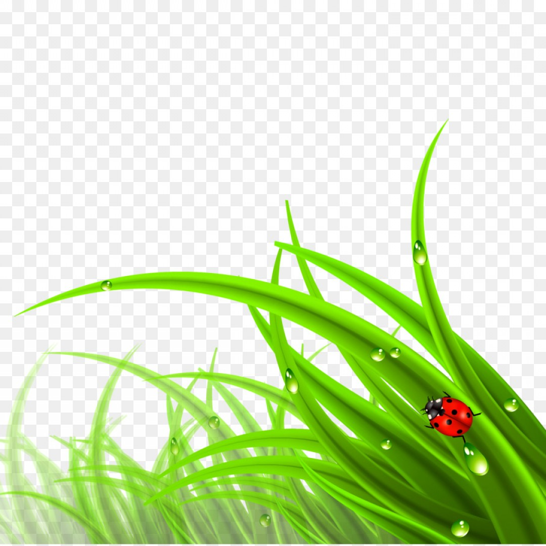 Grass Vector Graphic: Png Cdr Scalable Vector Graphics Grass Lawn