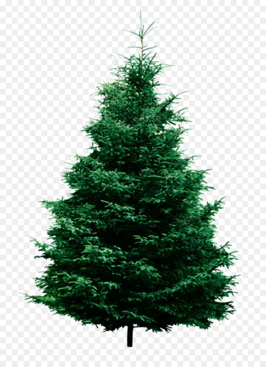 Christmas Tree Art Large Vector Format: Png Fraser Fir Pine Tree Clip Art Christmas Tree