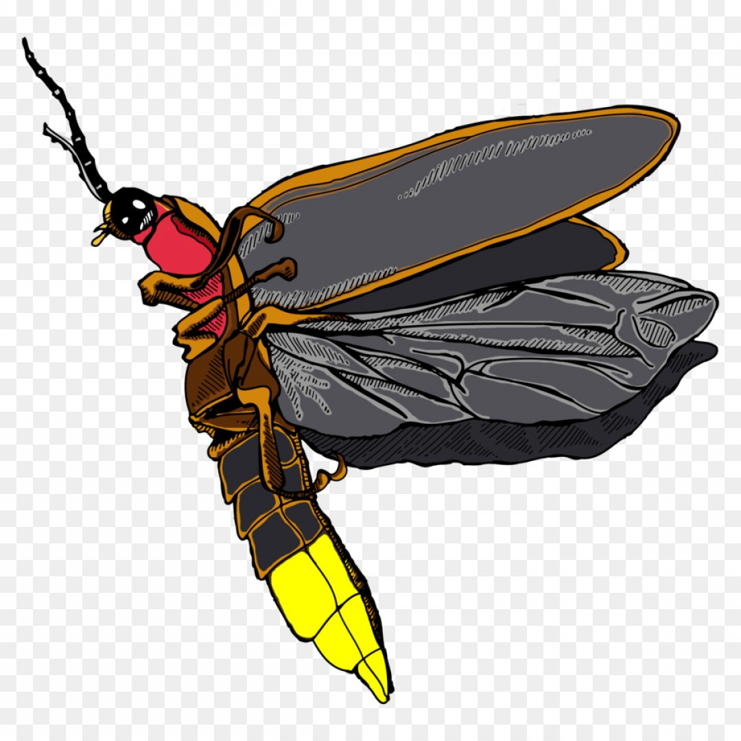 Firefly Serenity Vector: Png Honey Bee Hornet Insect Firefly