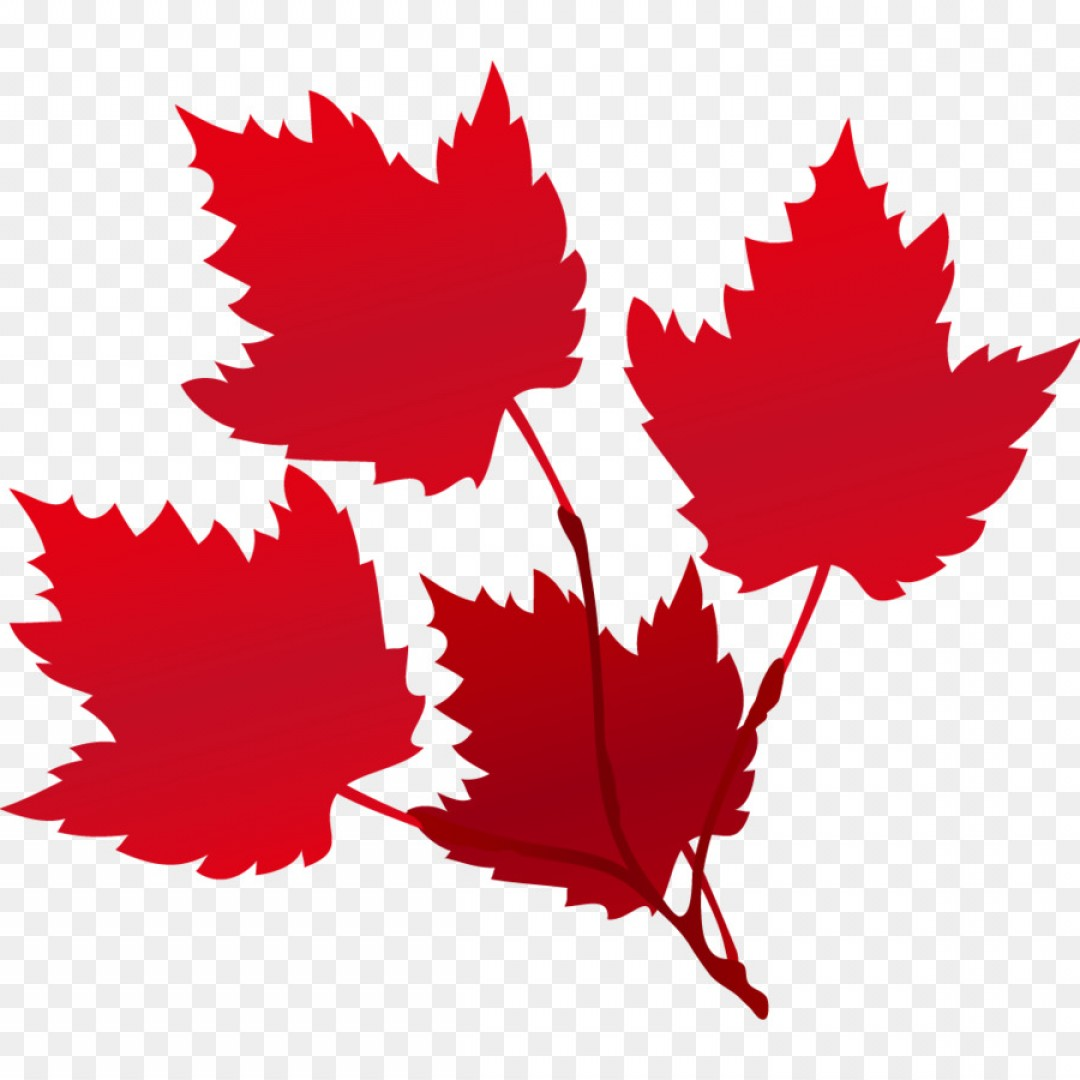 Red Maple Leaf Vector: Png Maple Leaf Red Euclidean Vector Raster Graphics Ve