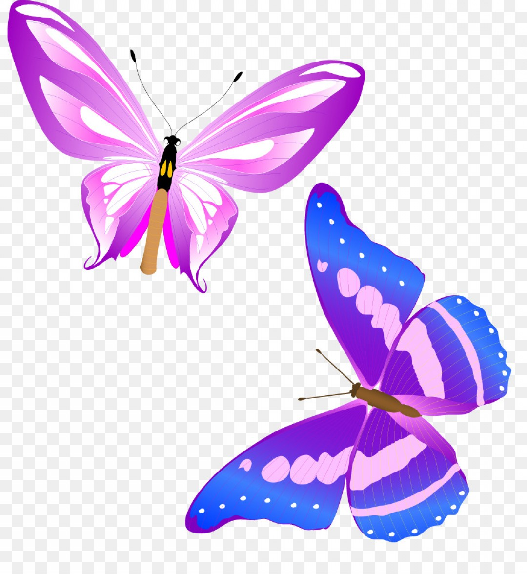 Butterly Vector: Png Monarch Butterfly Insect Clip Art Fun Colorful But