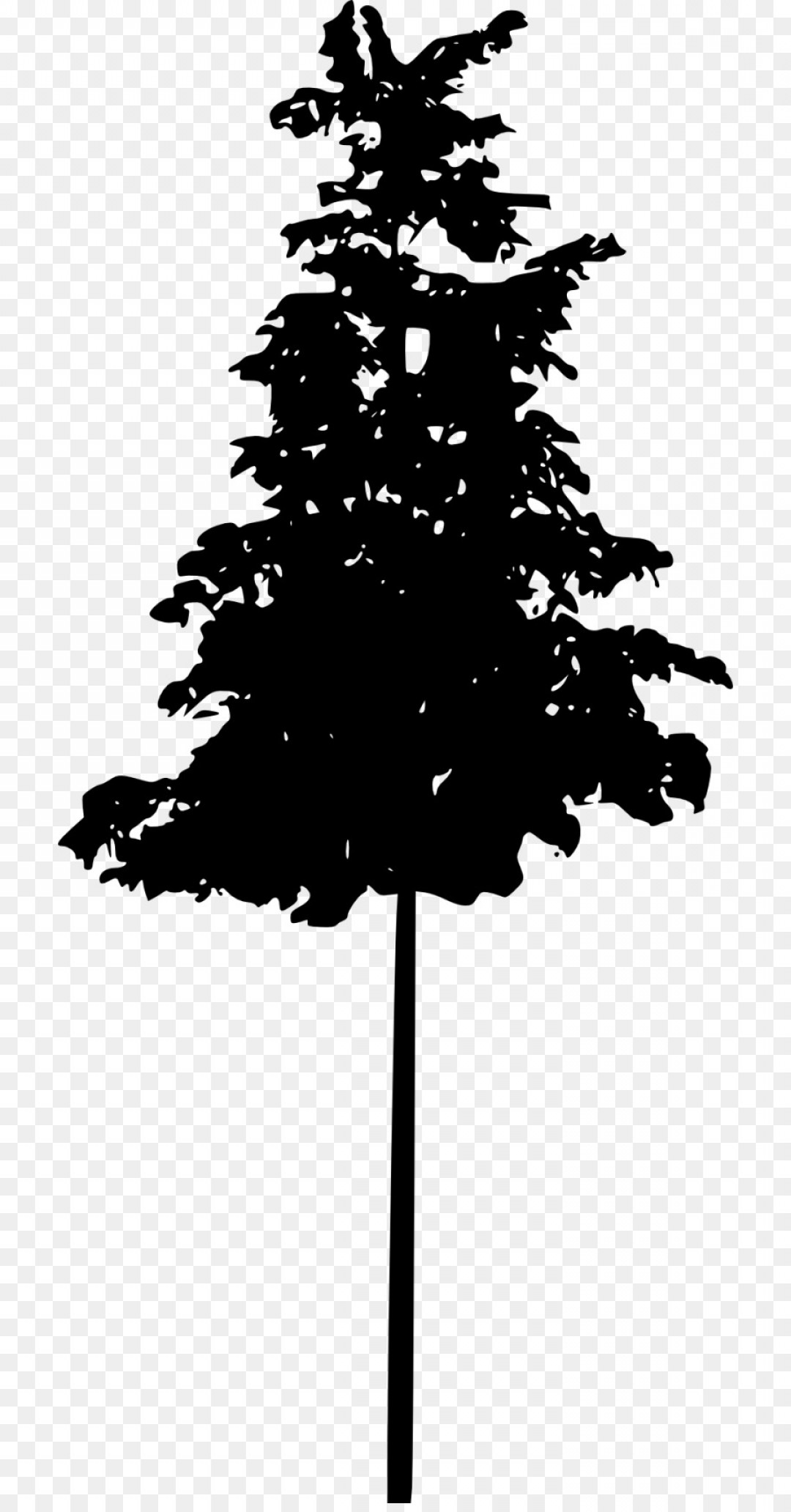 Pine Tree Vector Format: Png Pine Tree Spruce Conifers Tree Silhouette