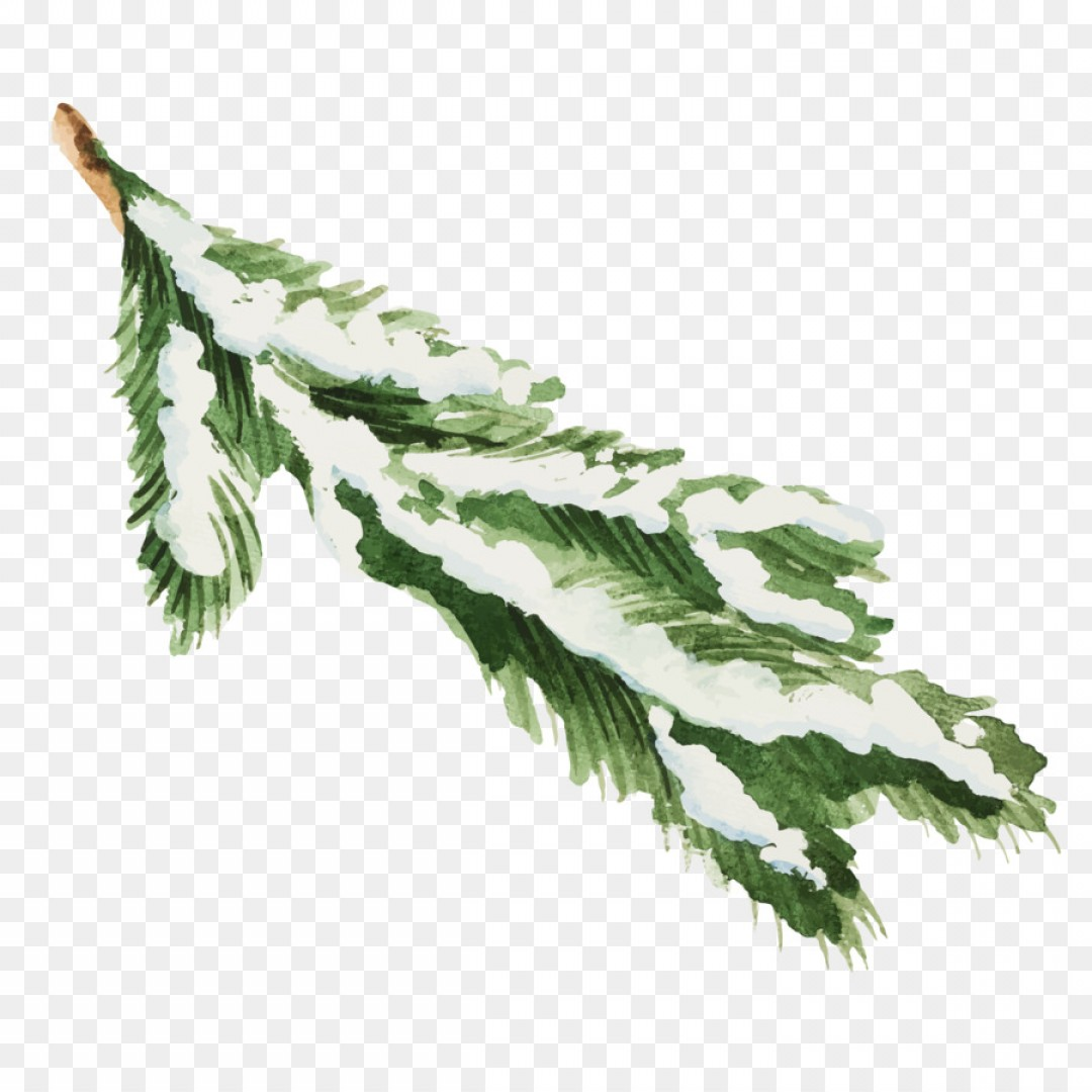 Pine Leaf Vector: Png Snow Leaf Illustration Snow Covered Pine Leaves Ve