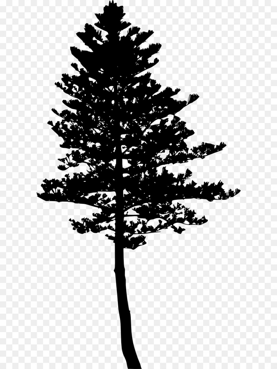 Pine Tree Vector Format: Png Tree Pine Silhouette Woody Plant Evergreen Pine Tr