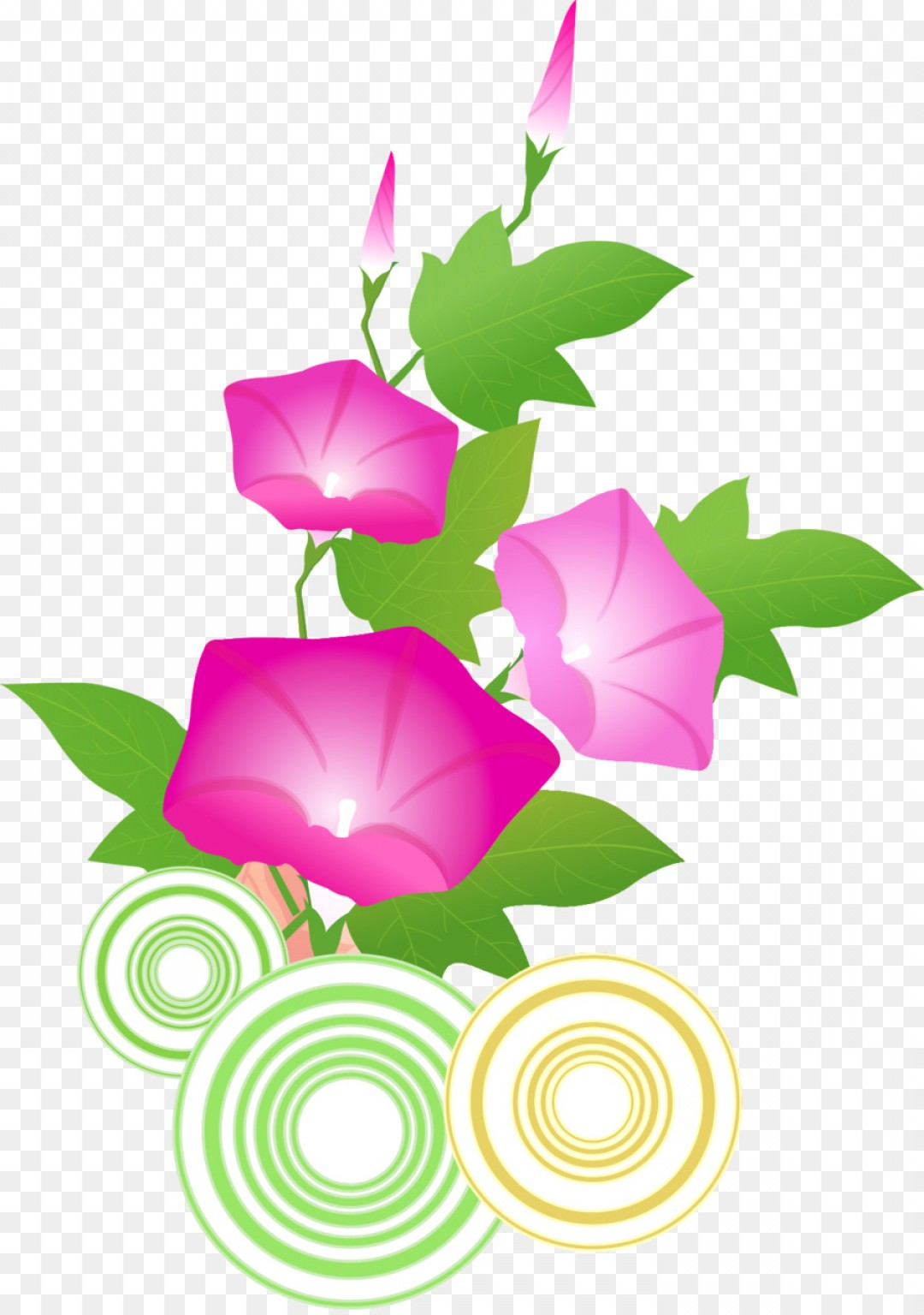 Morning Glory Transparent Vector: Png Vector Graphics Morning Glory Drawing Image No