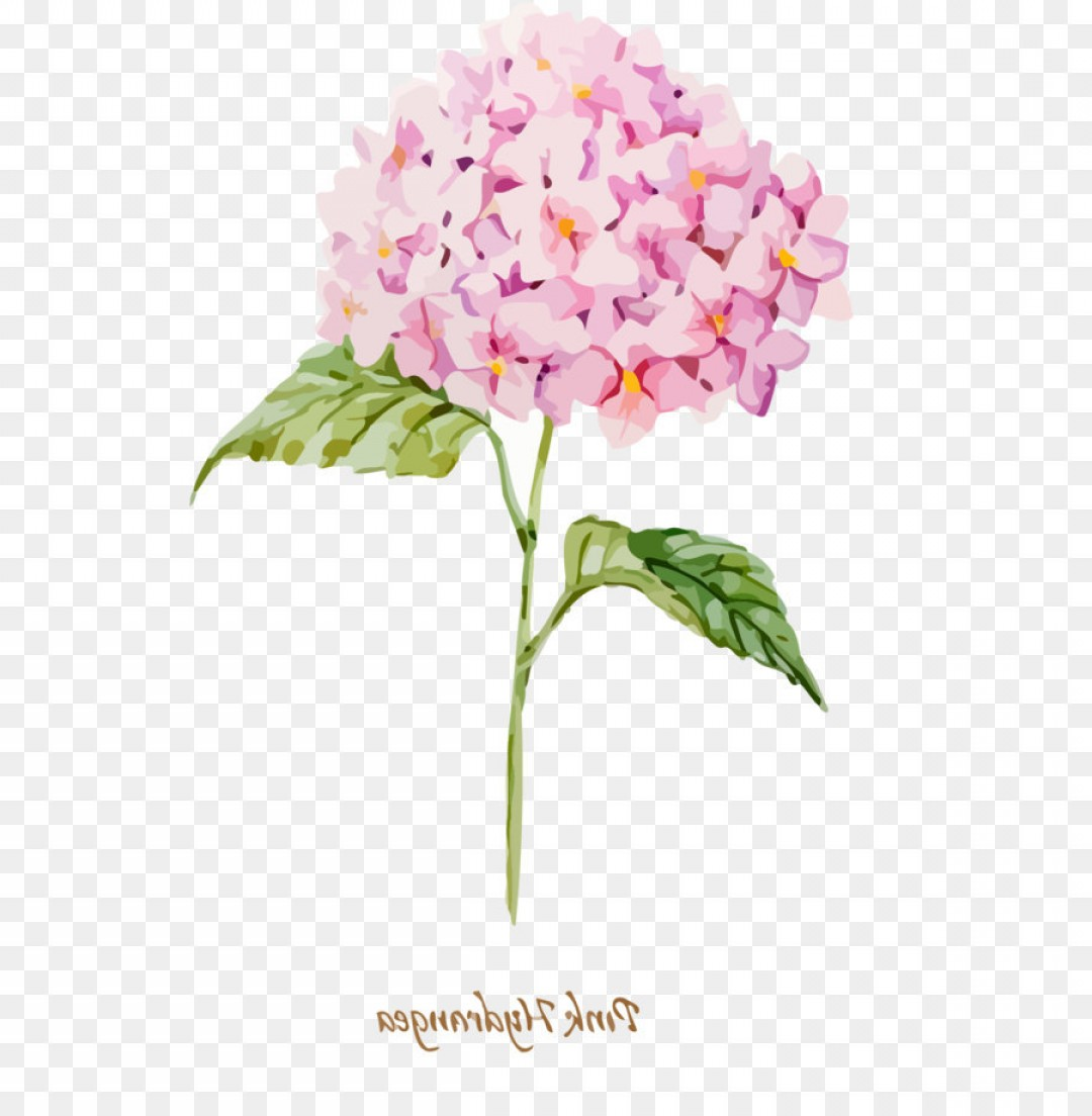 Hydrangea Vector Graphics: Png Watercolor Hydrangea Vector Material