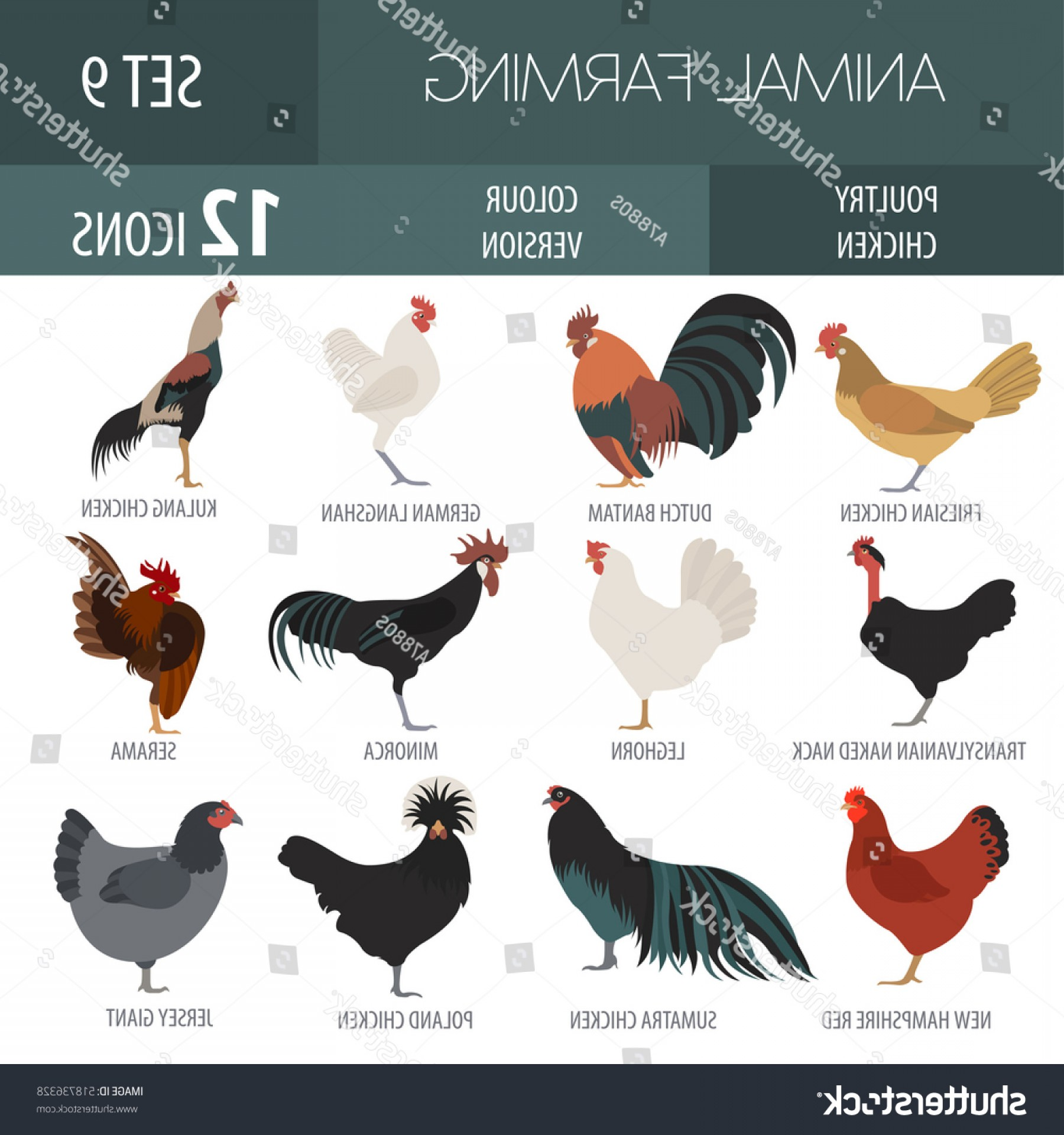 Poultry Vector Art: Poultry Farming Chicken Breed Isolated Icon