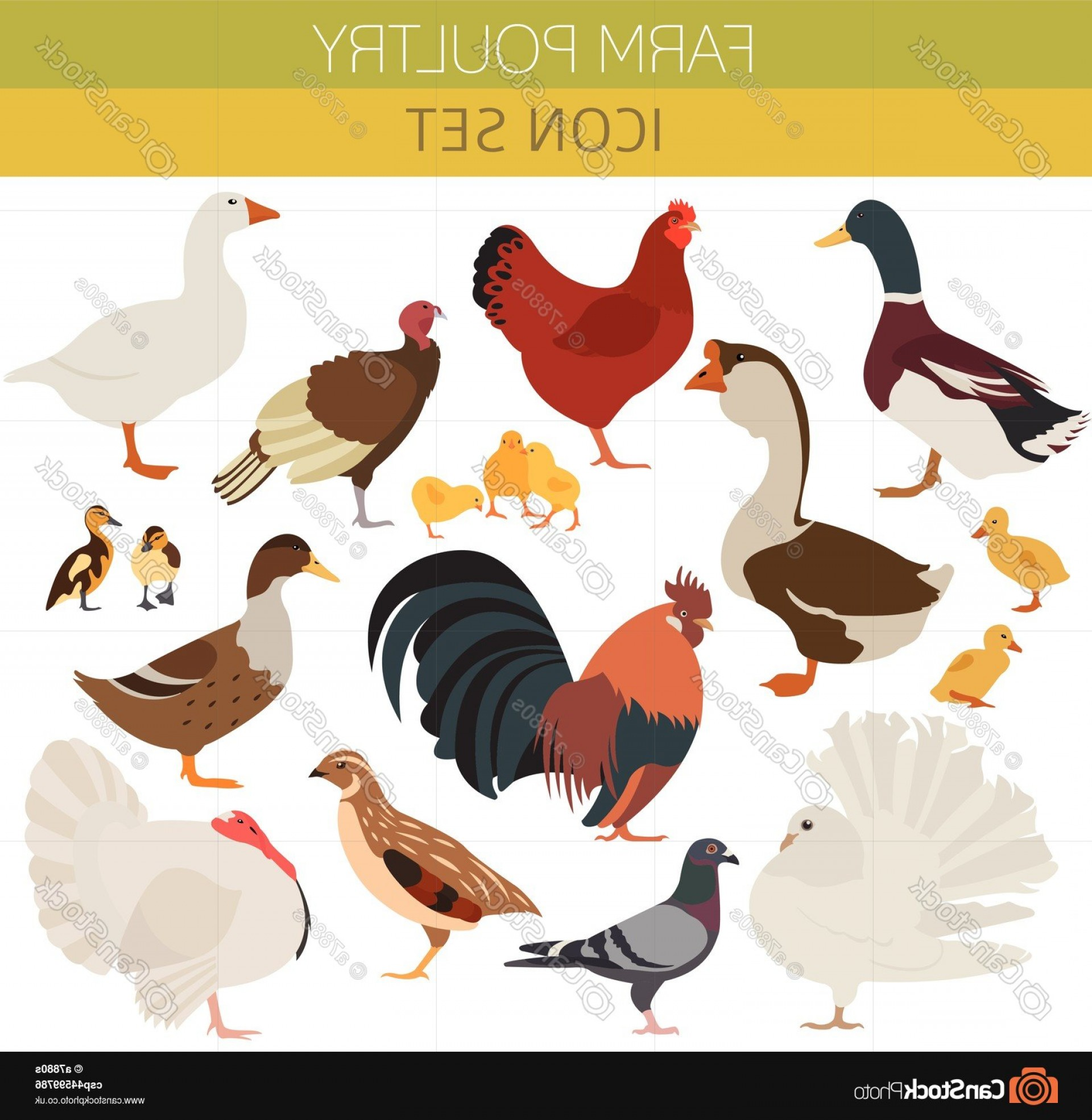 Quail Vector Art: Poultry Farming Chicken Duck Goose