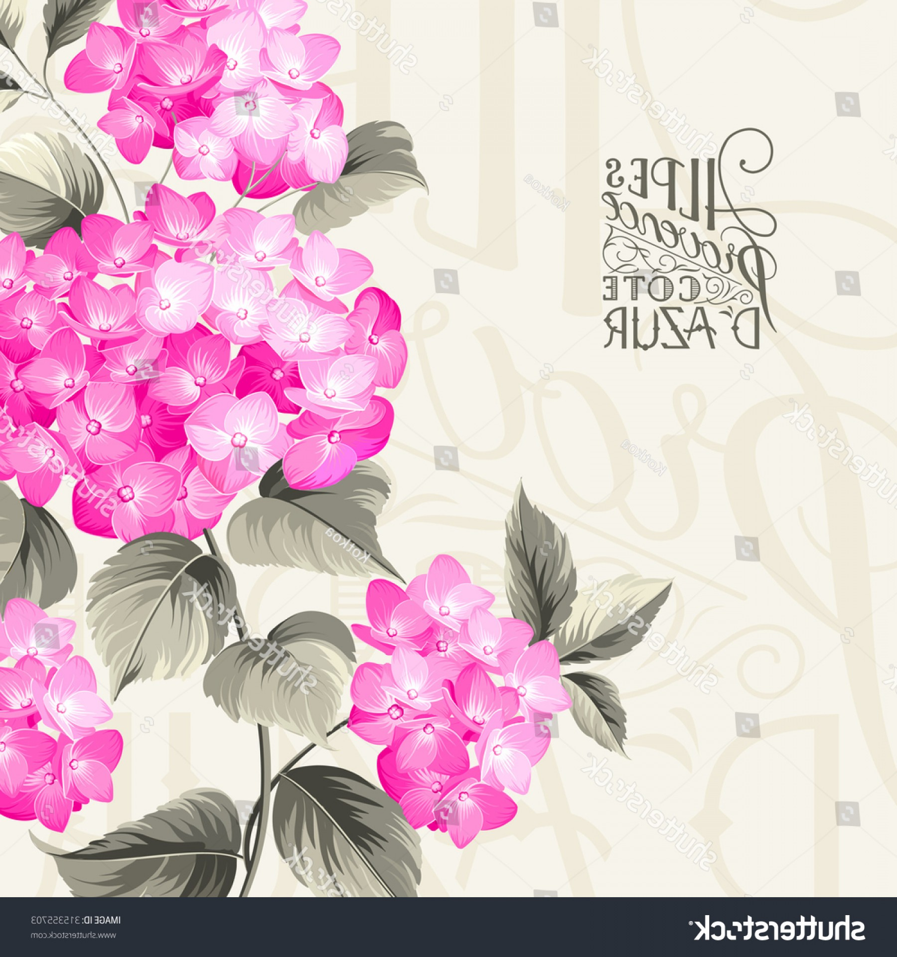 Vector Mop Flower: Purple Flower Hydrangea On Calligraphic Background