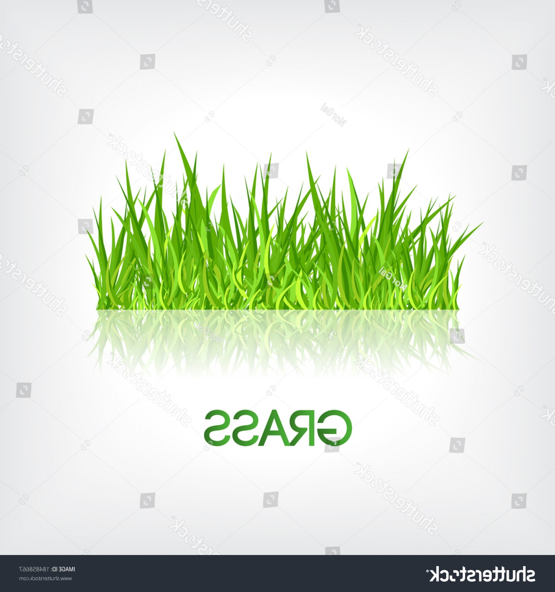 Grass Vector Graphic: Realistic Green Fresh Grass Vector Graphic