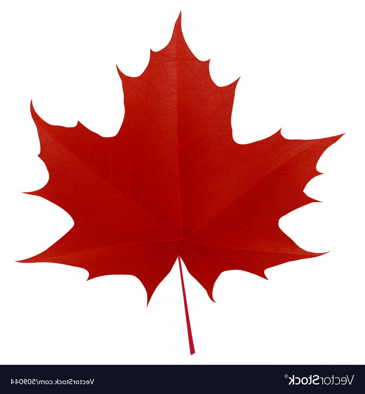 Red Maple Leaf Vector: Realistic Red Maple Leaf Vector