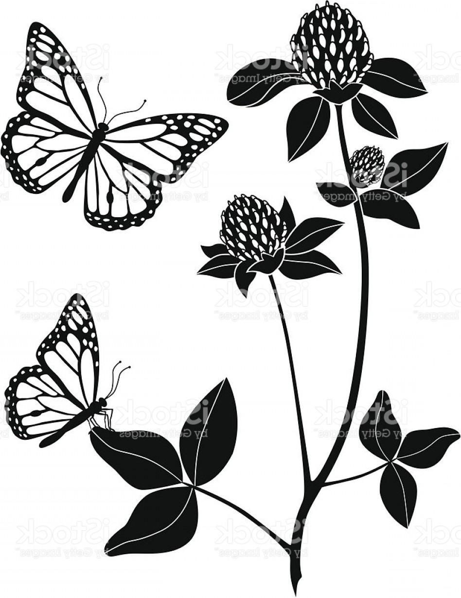 Butter Fly And Flower Vector Black And White: Red Clover And Monarch Butterflies Gm