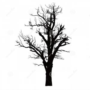 Vector Dead Tree Branches: Realistic Silhouette Dead Tree Dry Branches Realistic Silhouette Dead Tree Dry Branches Isolated Vector Image