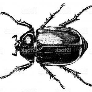 Bug Vector Art: Stock Images Insect Beetle Vector Beautiful Exotic Patterned Design Tattoo Image