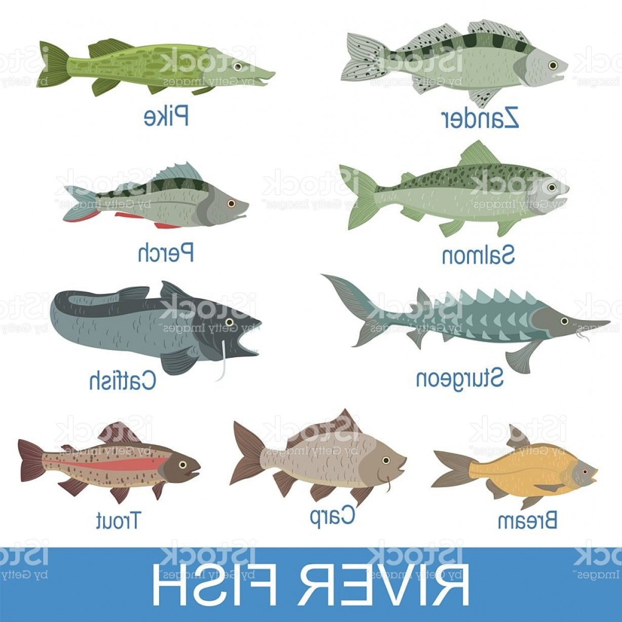 River Silhouette Vector Art: River Fish Identification Slate With Names Gm