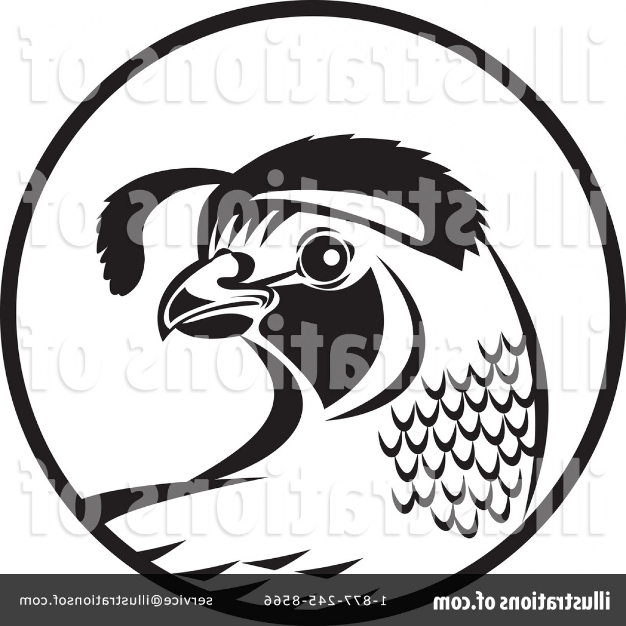 Quail Vector Art: Royalty Free Quail Clipart Illustration