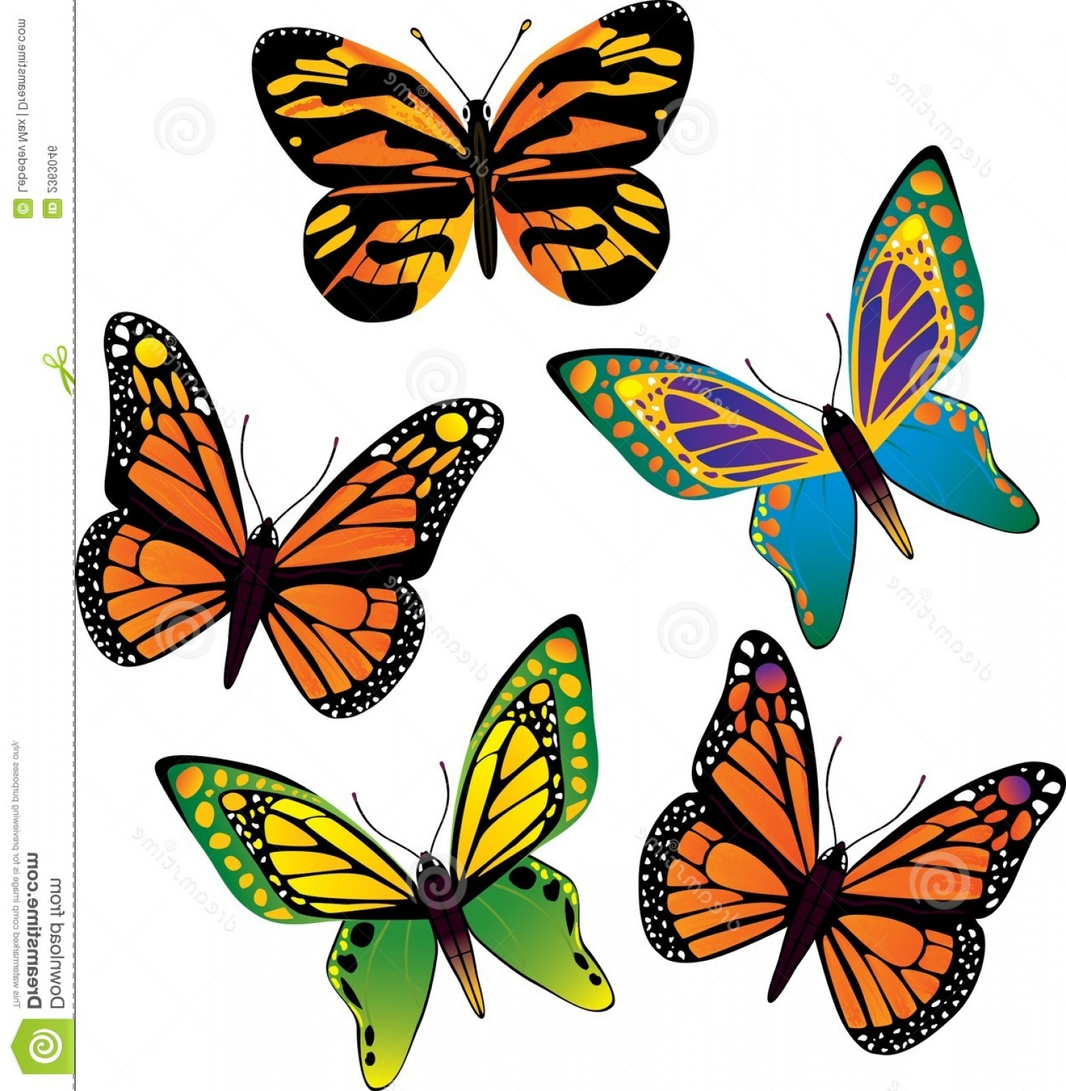 Vector Butterfly Clip Art: Royalty Free Stock Image Vector Butterfly Image