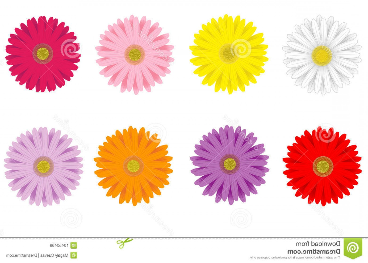 Purple Gerber Daisy Vector Framw: Royalty Free Stock Images Colorful Gerbera Daisies Image