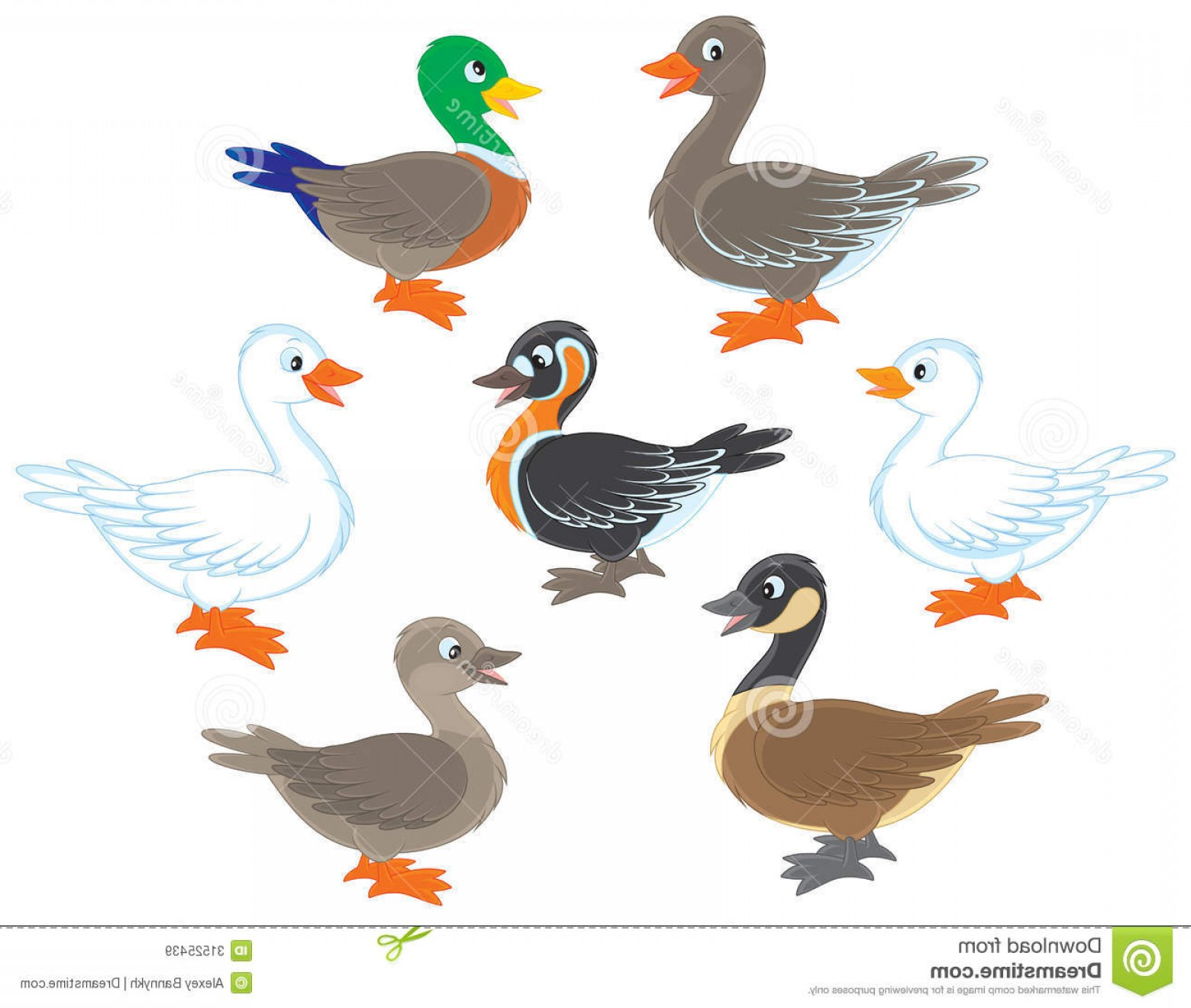 Geese Vector: Royalty Free Stock Images Ducks Geese Several Wild Domestic Birds Vector Illustrations White Background Image