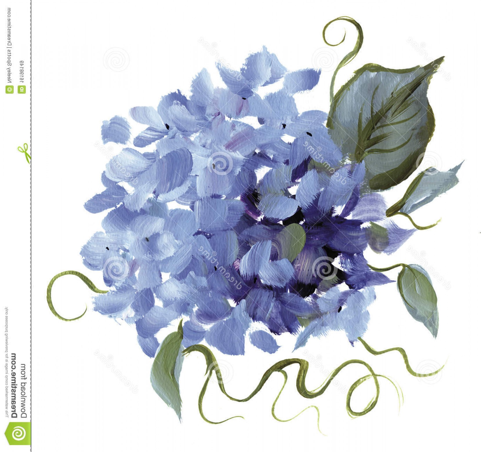 Hydrangea Vector Graphics: Royalty Free Stock Images Hand Painted Hydrangea Image