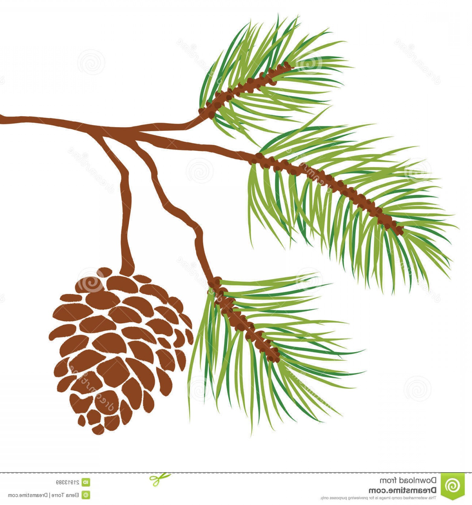 Pine Leaves Vector: Royalty Free Stock Images Pine Tree Branch Cone Vector Image