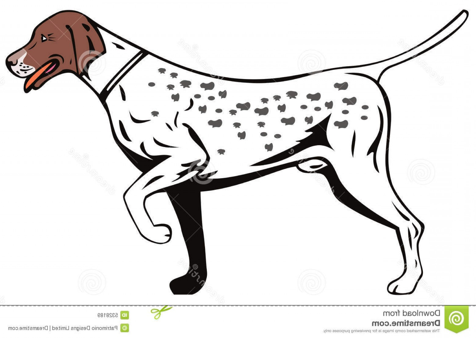 Pointer Dog Vector: Royalty Free Stock Images Pointer Dog Image