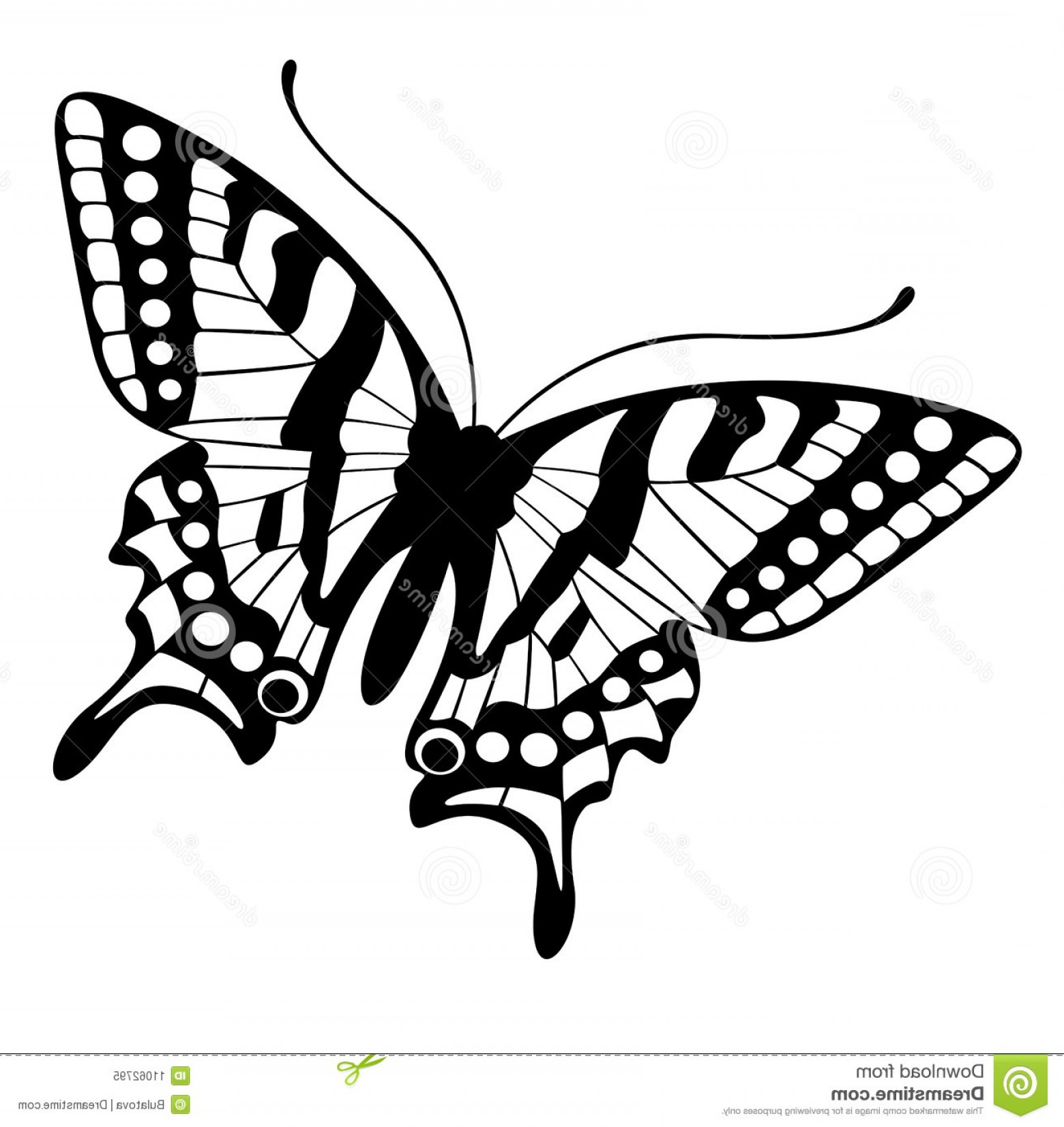 Butterly Vector: Royalty Free Stock Photo Butterfly Vector Image