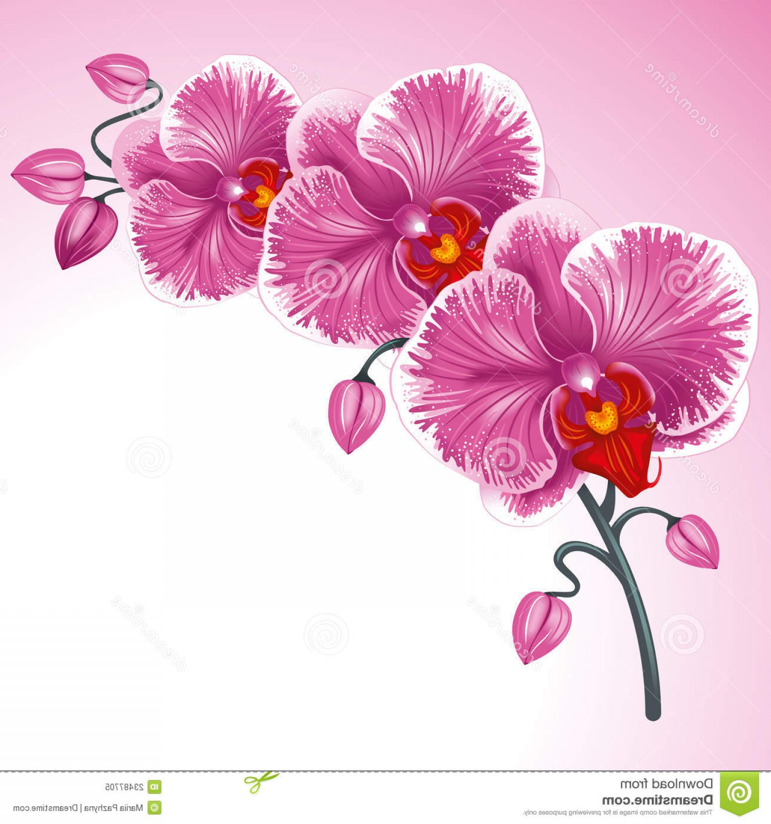 Purple Orchid Vector: Royalty Free Stock Photo Purple Orchid Image