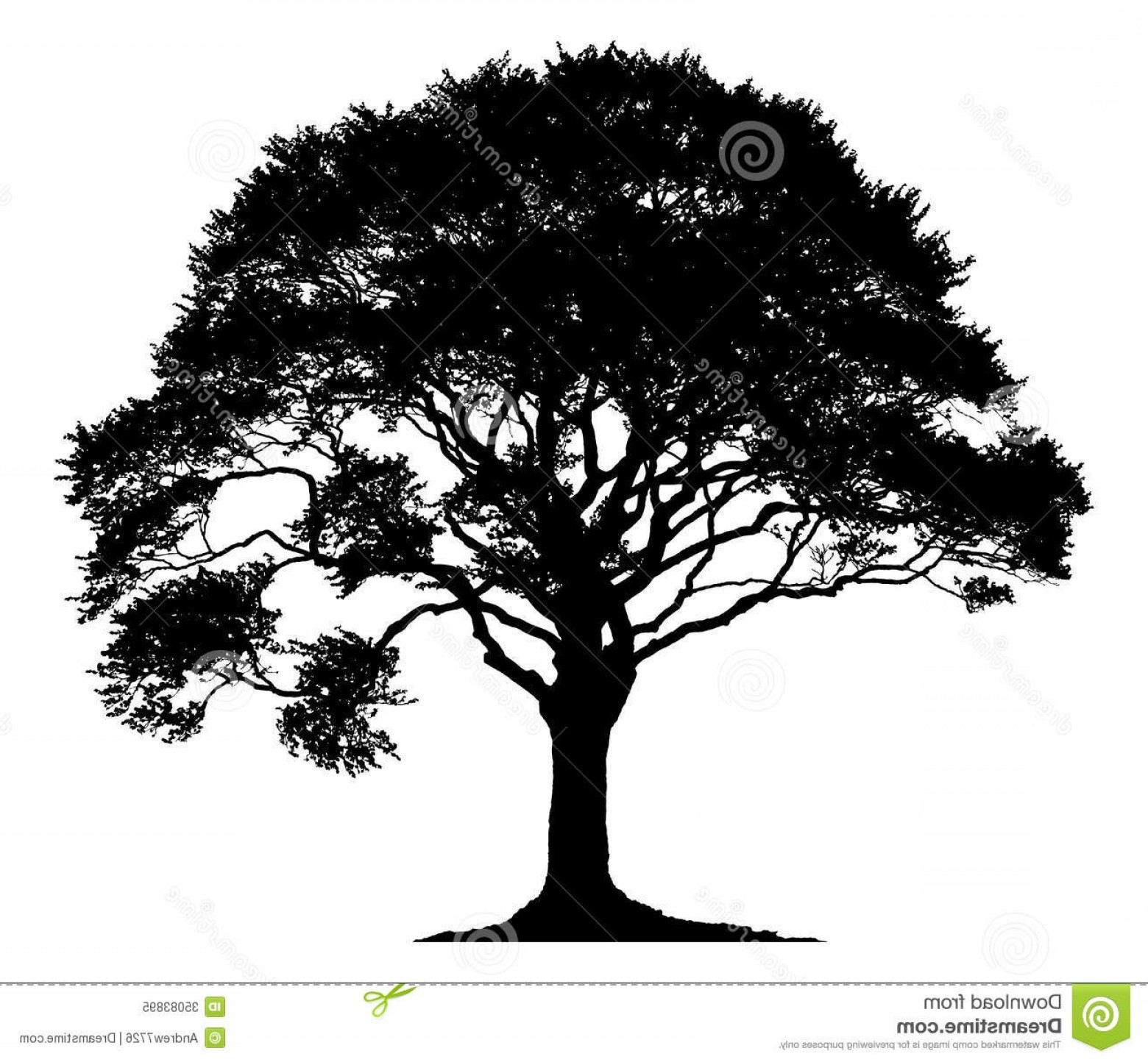 Oak Tree Silhouette Vector Graphics: Royalty Free Stock Photo Silhouette Lone Tree Isolated White Background Image