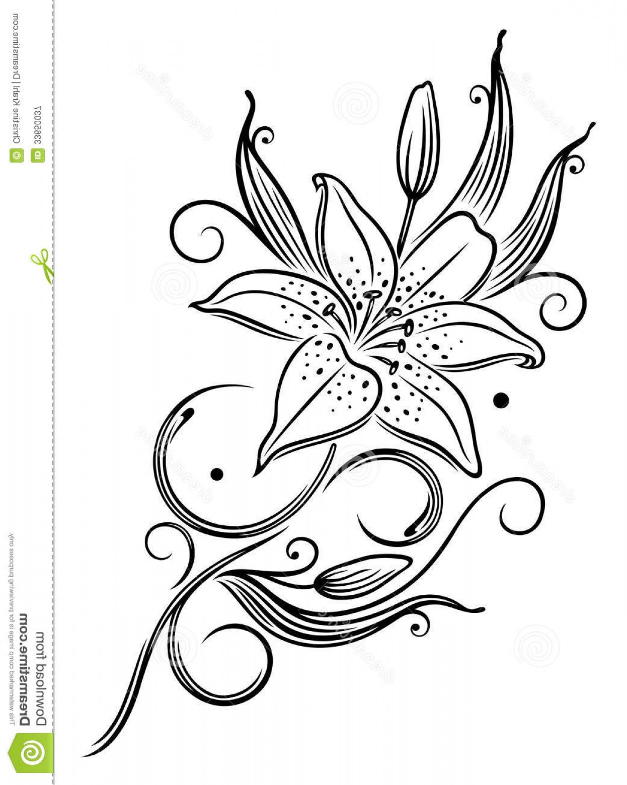 Lily Vector Art: Royalty Free Stock Photography Lily Flower Filigree Tendril Black Vector Art Image