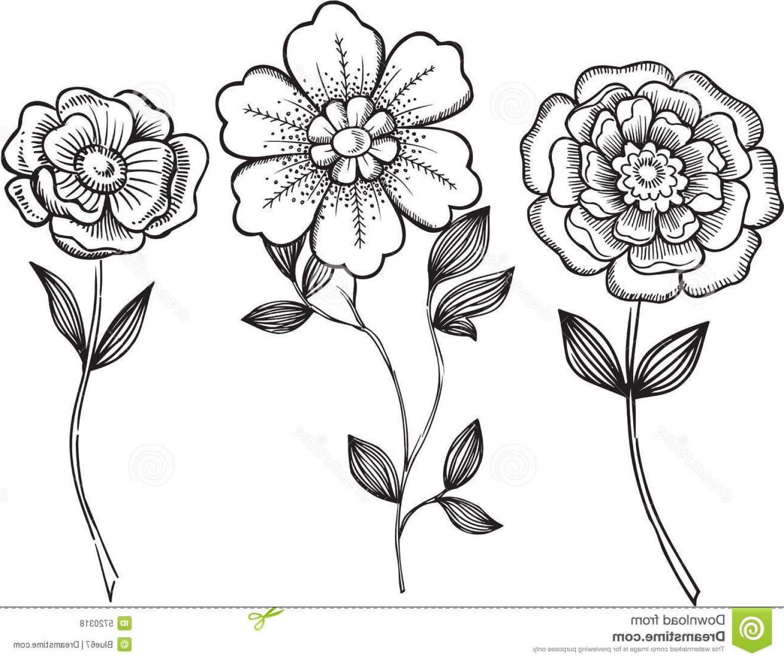 Floral Vector Illustration: Royalty Free Stock Photos Ornamental Flowers Vector Illustration Image