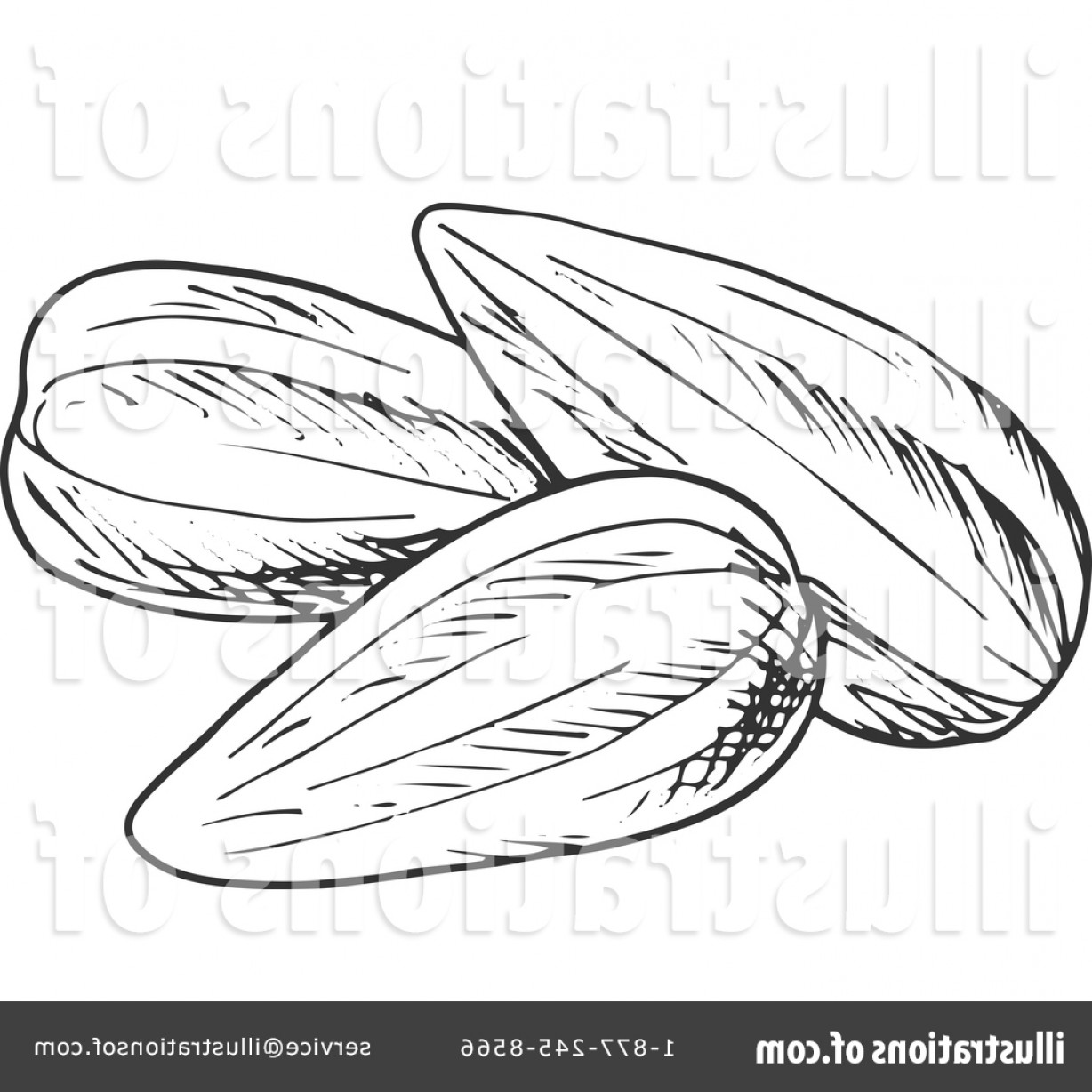 Vector Black And White Sunflower Seed: Royalty Free Sunflower Seed Clipart Illustration